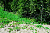 Lifestock fence at entrance to wildlife overpas US Hwy 93, MT