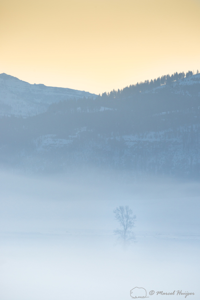 Tree in morning fog at sunise, Wyoming, USA