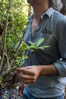 Jorge Carlos Trejo Torres and a seedling from a tree, Quintana R