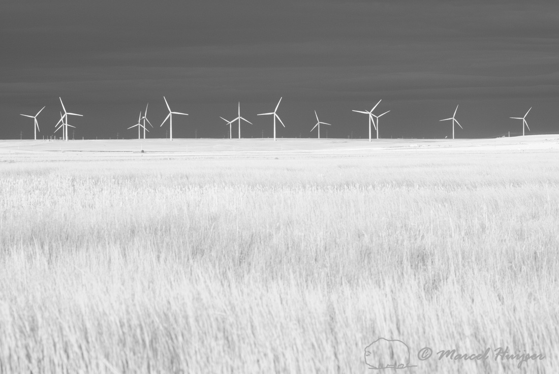 Wind turbines at Freezout Lake, in infrared, Montana, USA