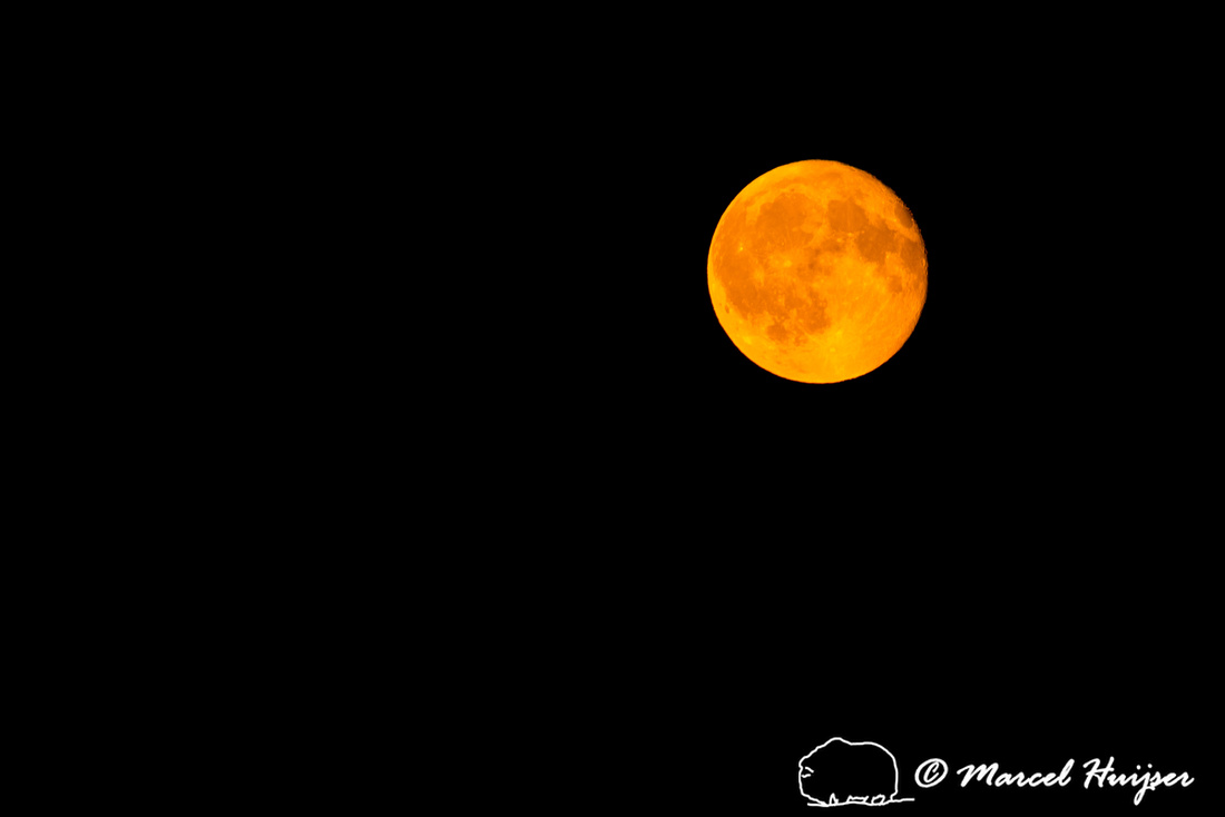 Orange or red moon due to forest fires and smokey skies, Missoul