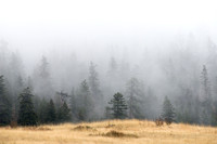 Forest and grassland in the fog, Montana, USA