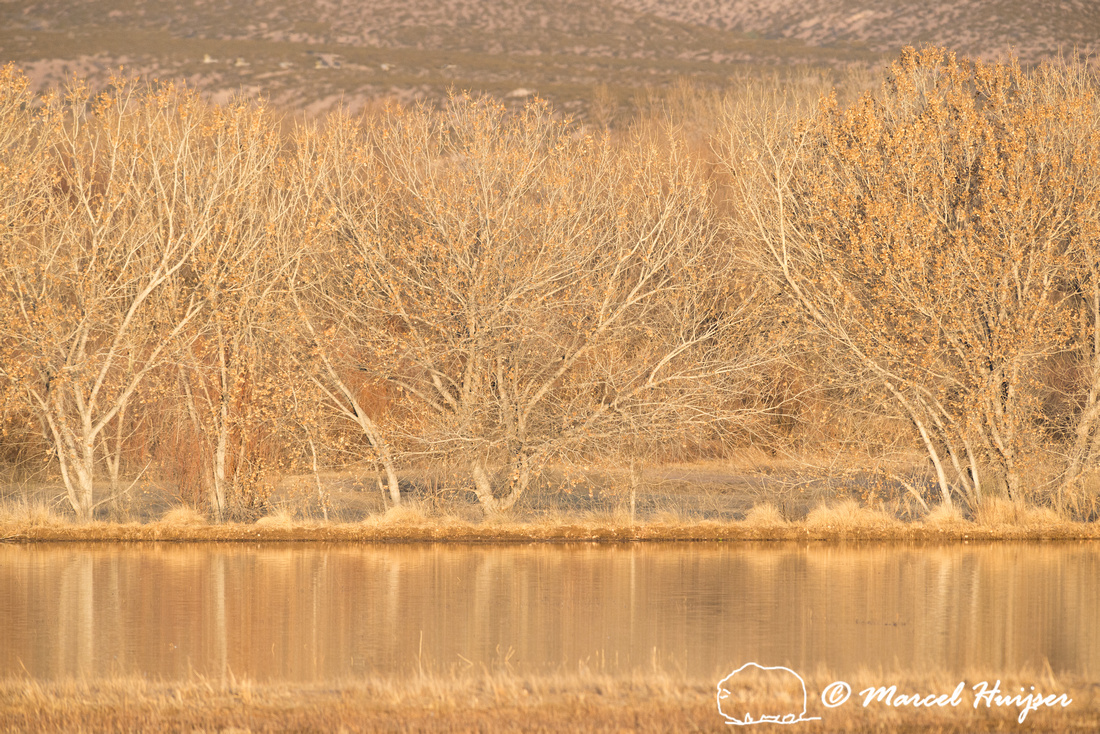 Morning light, Bosque del Apache National Wildlife Refuge, New M