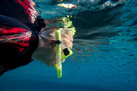 Ted Walder snorkels for West Indian manatee (Trichechus manatus)