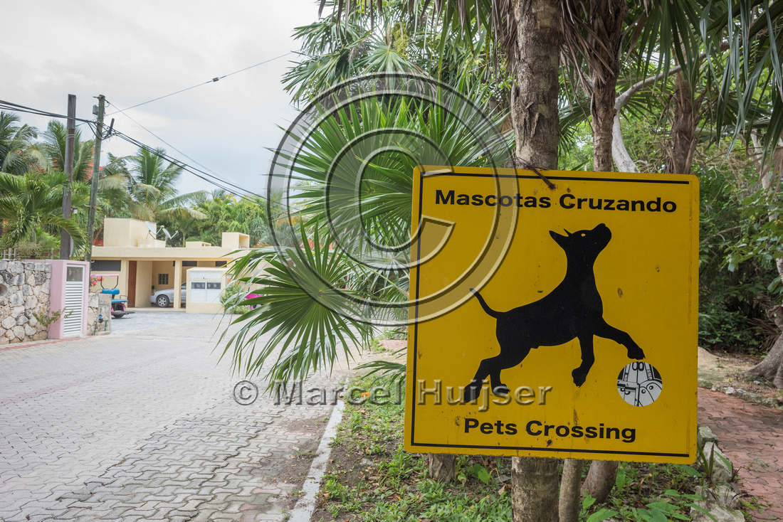 Warning sign for pets (dogs) crossing, Yucatán, Mexico