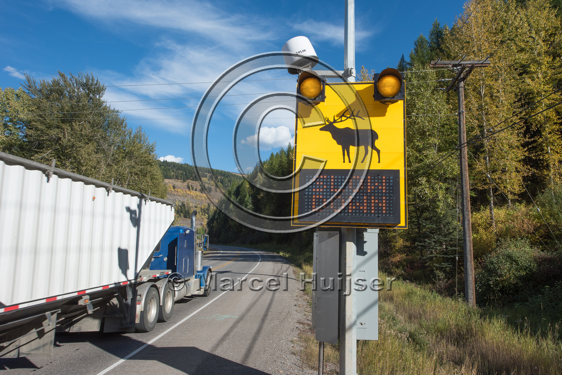 Warning sign animal detection system, near Sparwood, British Col