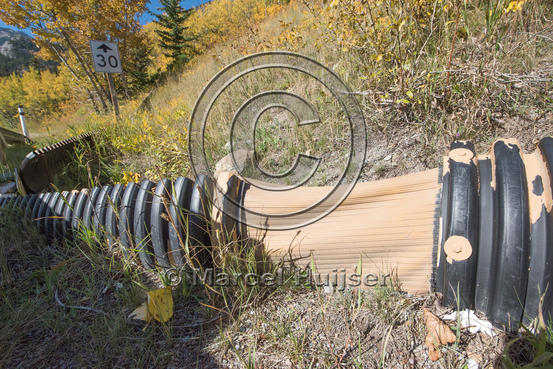 Barrier screens (fences) and culverts for long-toed salamander (