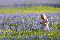 Flower girl in field with blue camas (Camassia quamash) Packer Meadows, Idaho, USA