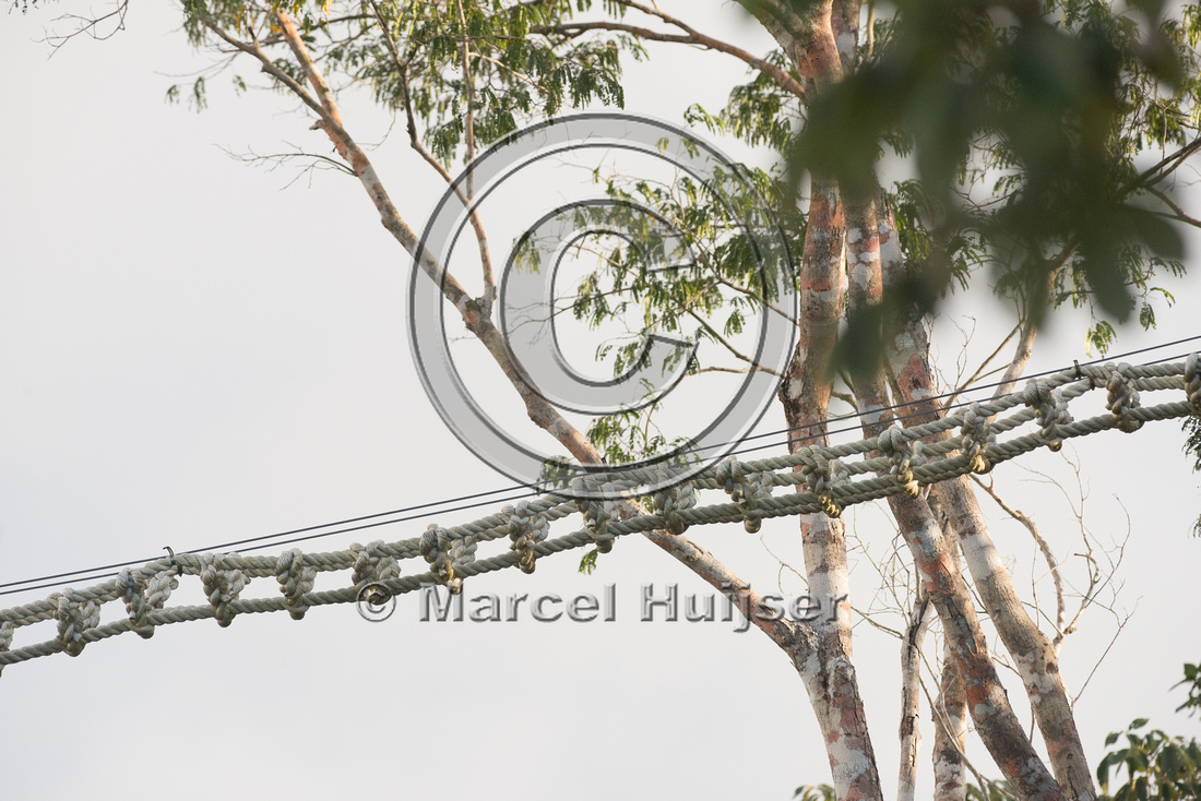 Canopy crossing for arboreal mammals, Nuevo Xcan-Playa Del Carme