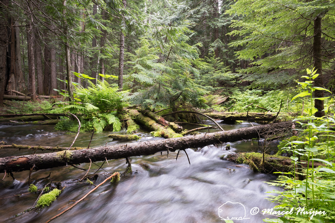 Red Cedar Forest ~ Marcel huijser photography creek through western red