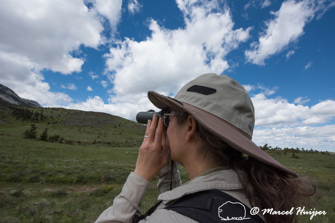 Bethanie Walder looking for wildlife, Montana, USA
