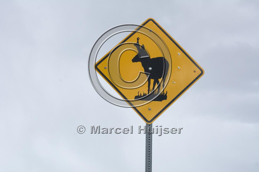 Warning sign,  pronghorn (Antilocapra americana), Nevada, USA