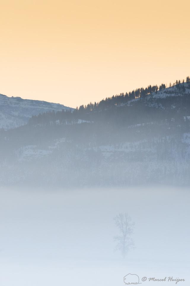 Tree in morning fog at sunrise, Wyoming, USA