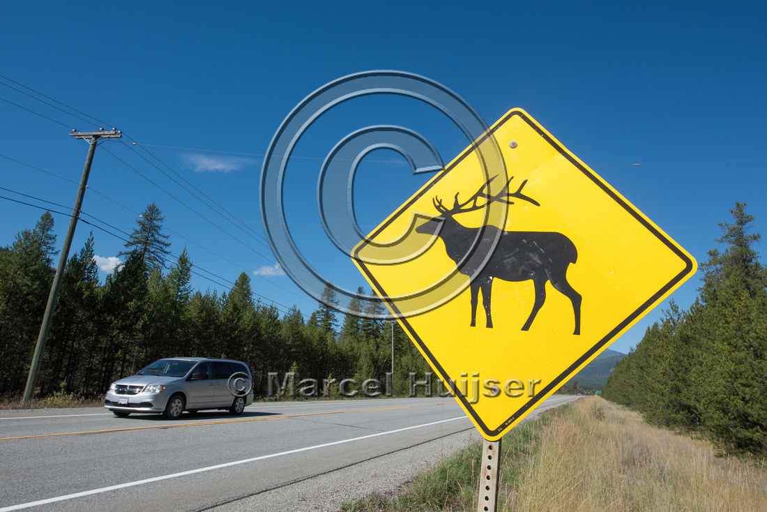 Warning sign for elk (Cervus canadensis), British Columbia, Cana