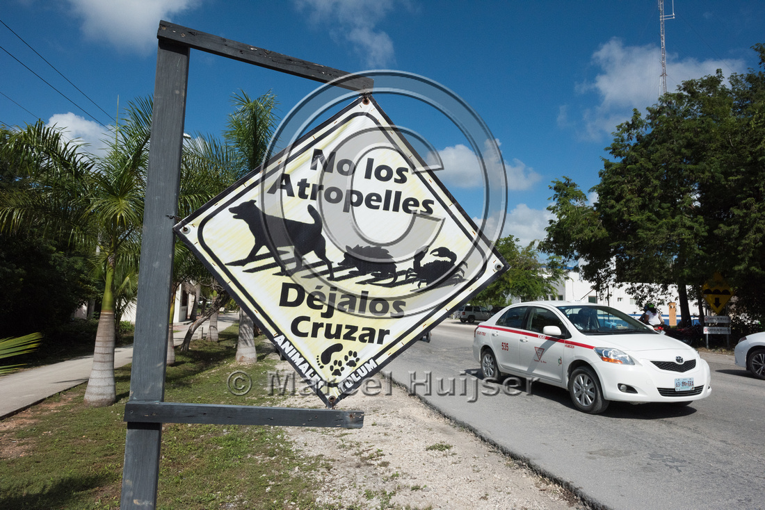 Warning sign for dogs, opossums and crabs, Tulum,  Mexico