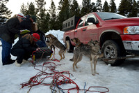 Race to the Sky, sled dog race, February 13-15 2015, Seeley Lake, Montana, USA