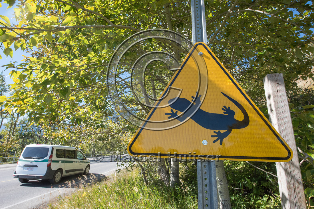 Warning sign for long-toed salamander (Ambystoma macrodactylum),