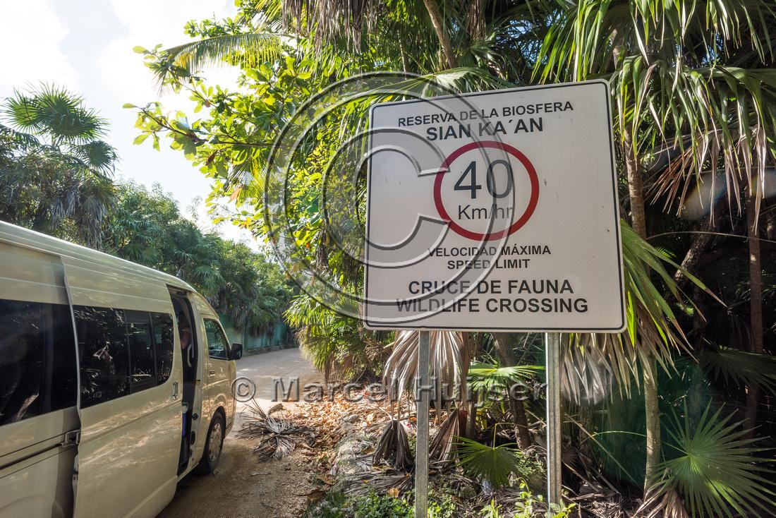Maximum speed limit sign 40 km per h because of wildlife crossin