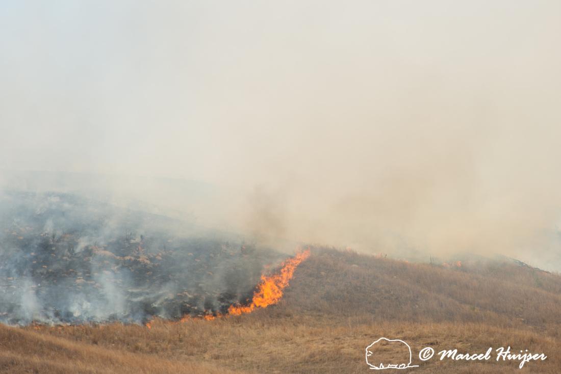 Prescribed grassland and wetland fire, Valentine National Wildli